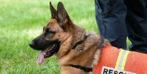 Search and Rescue - Manalo K9