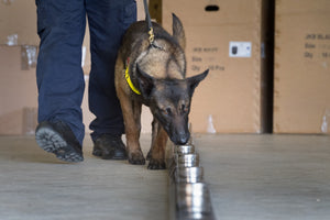 Explosives Detection Training - Manalo K9