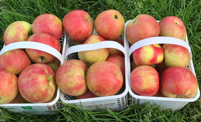 Apples- Honeycrisp *now sold out till fall*