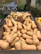 Load image into Gallery viewer, Squash - butternut