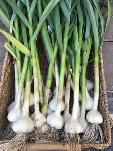 Garlic (New 2020 crop)