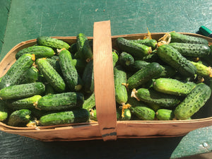 Cucumbers ( Pickling)