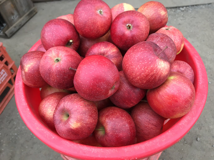 Apple Special!!  Half bushel smaller apples for $9.99