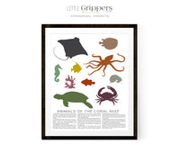 Animal of the Coral Reef Poster
