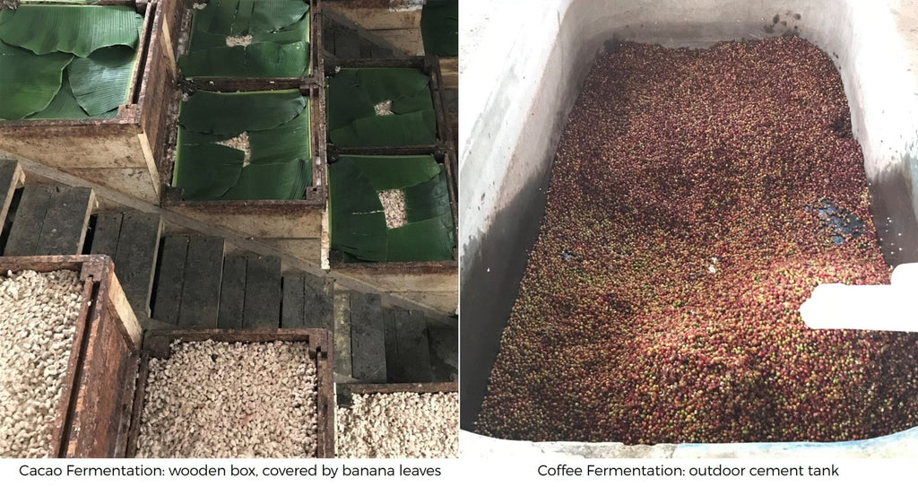 How are coffee and cacao fermented? fermentation boxes and tanks