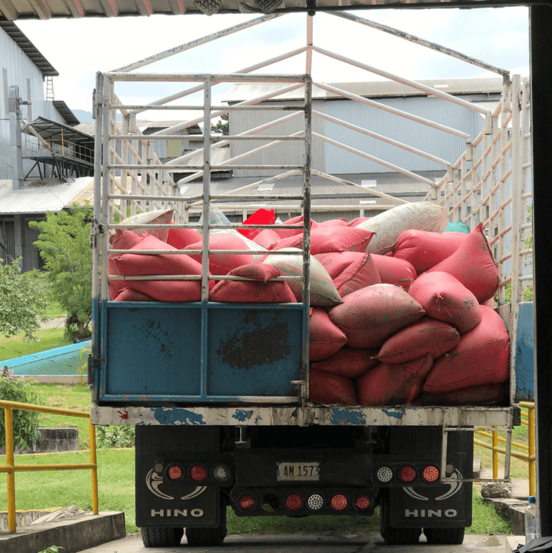 Wet Cacao Beans arriving at Fermentation Facility Honduras Coagricsal