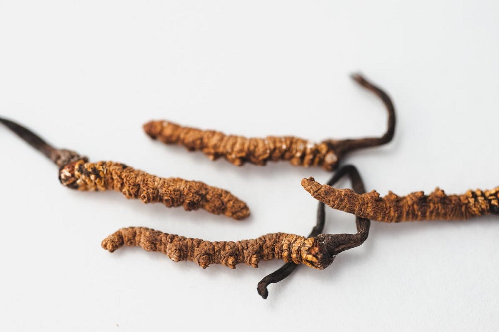 Cordyceps benefits for skin