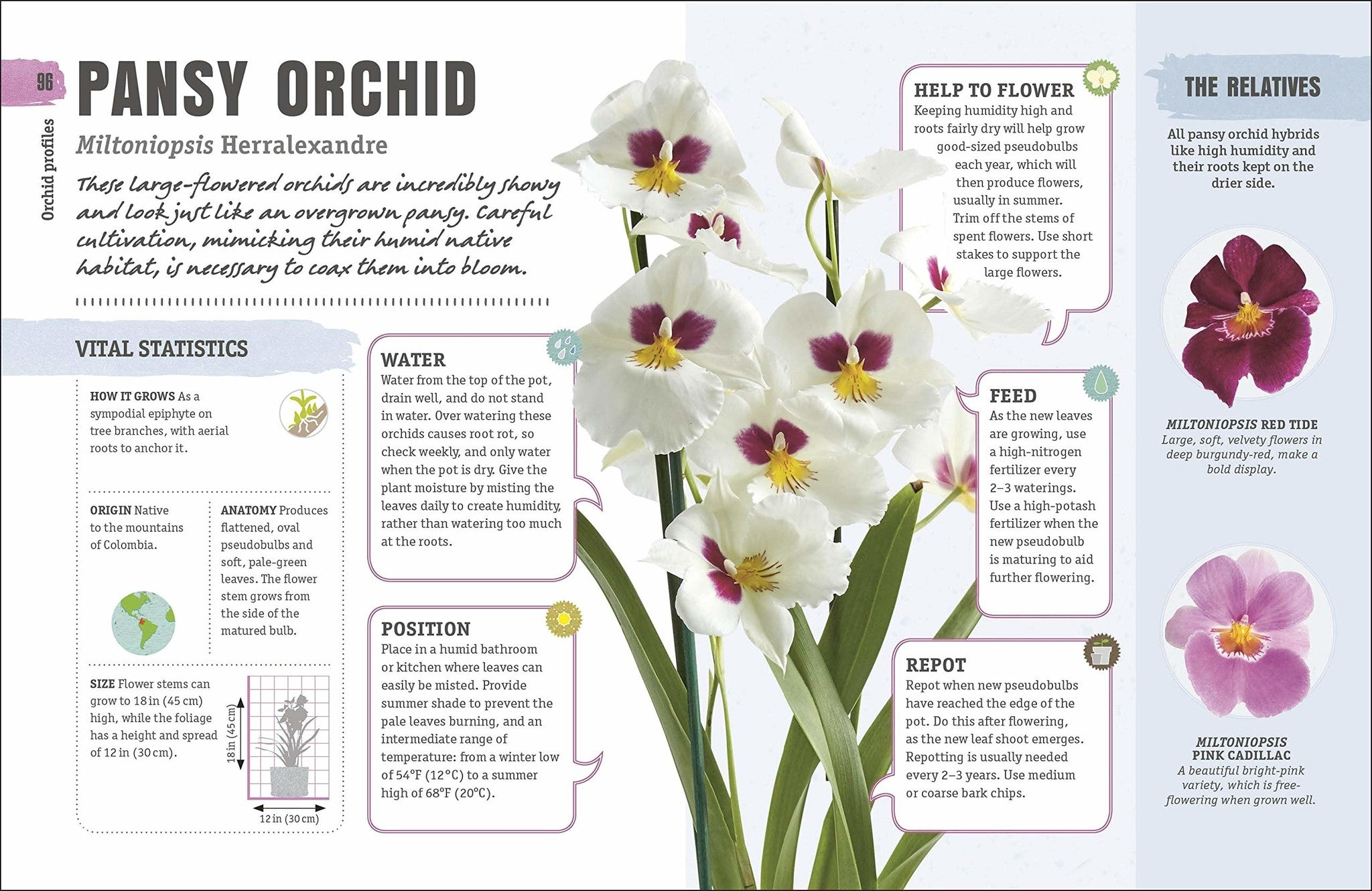 happy orchid book