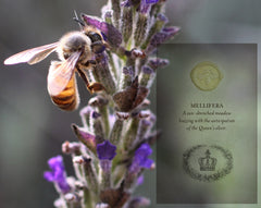 Mellifera Solid Perfume in Round Tin