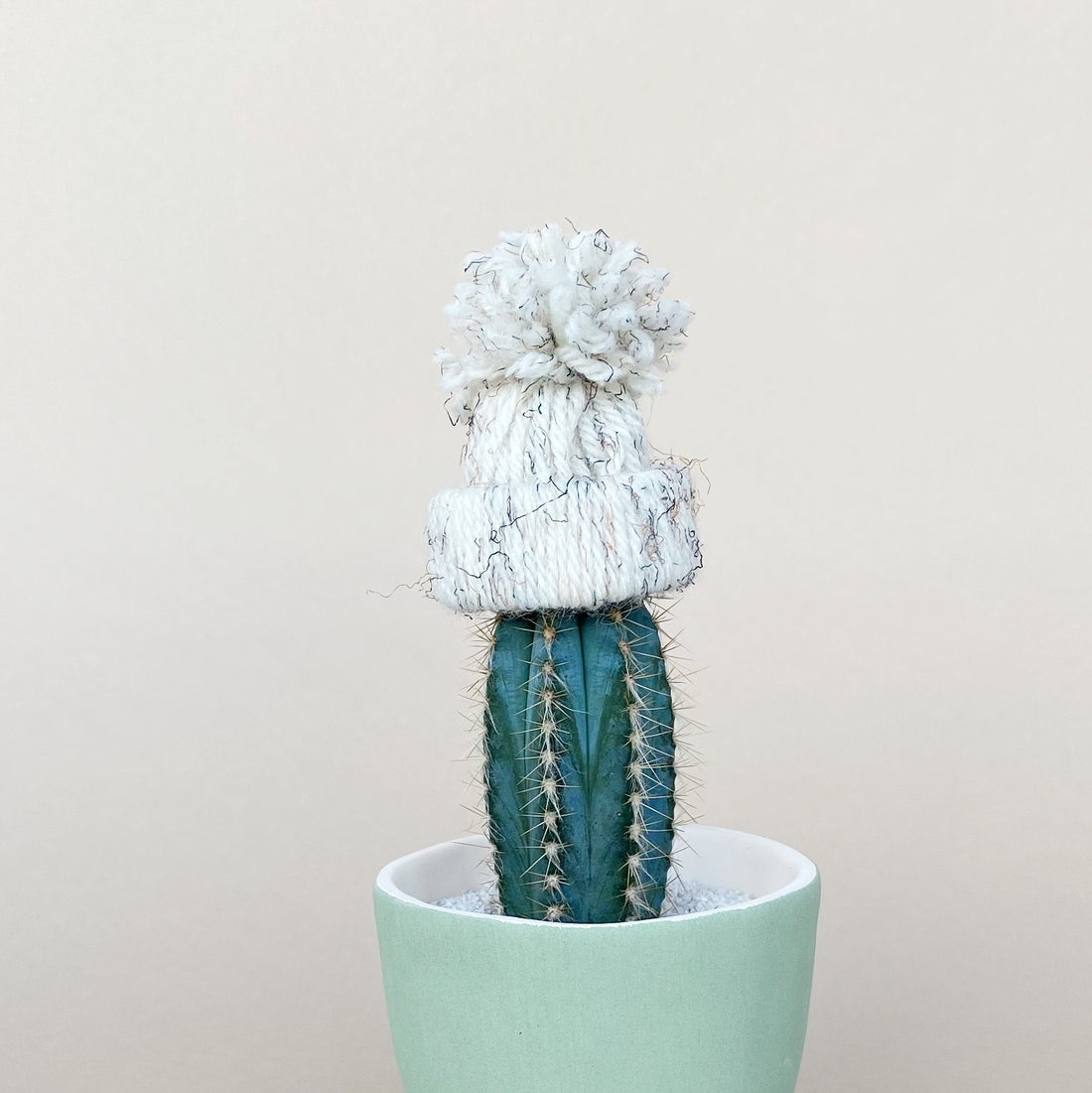 8 Easy Ways to Make Sure Your Plants are Healthy in Winter - Cute Cactus with a Hat on top