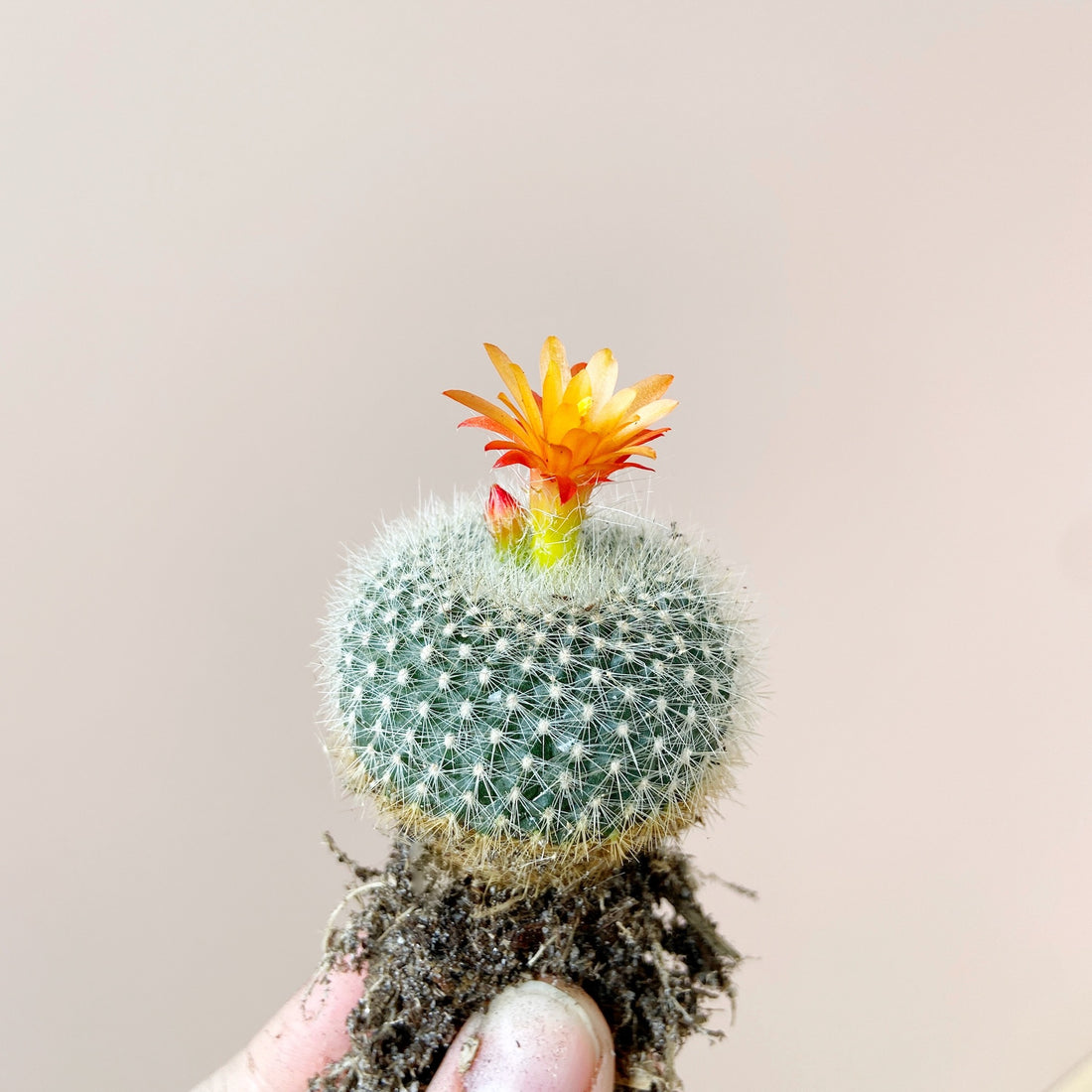 Tips to Make your Cactus, Succulents and Plants Bloom