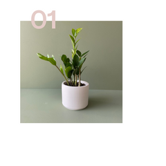Plant that doesn't need a lot of water or attention