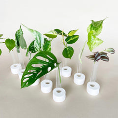 Plant Projects for Kids