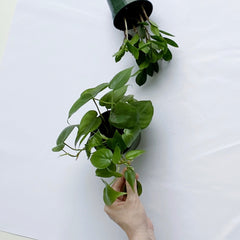 Houseplants that Kids Can Take Care Of