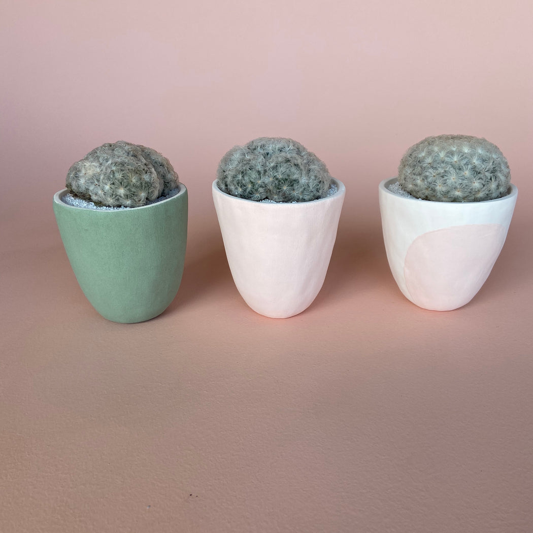 Cute Ada Cactus in Modern Planters that are easy to take care of succulents