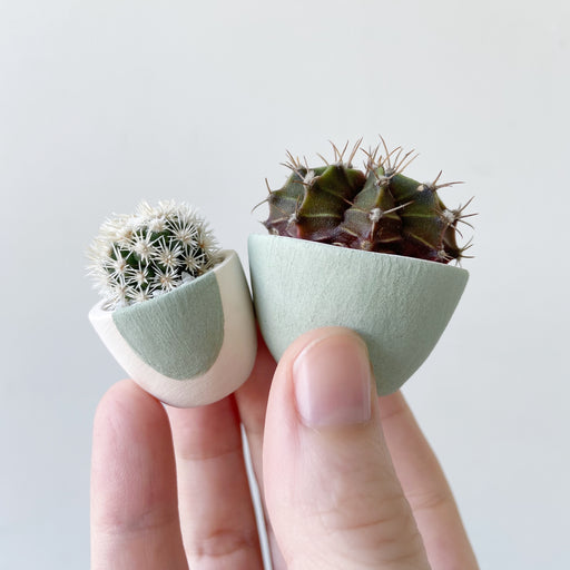 Hand holding two green ceramic pots and green and purple mini cactus plant named Charley and mini white cactus named Candace