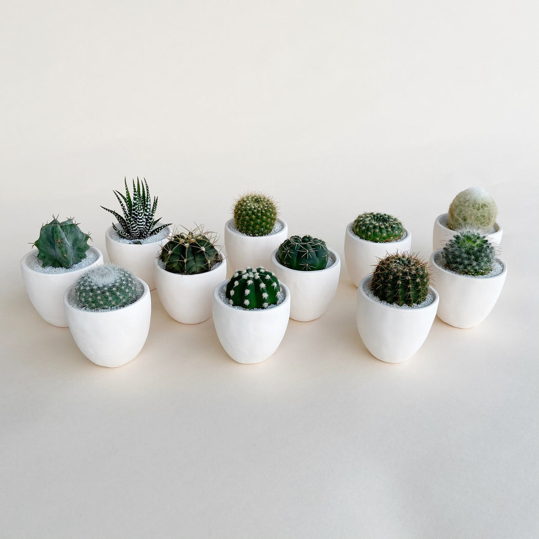 Group photo of all the green medium cacti and succulents in pant and planter product release