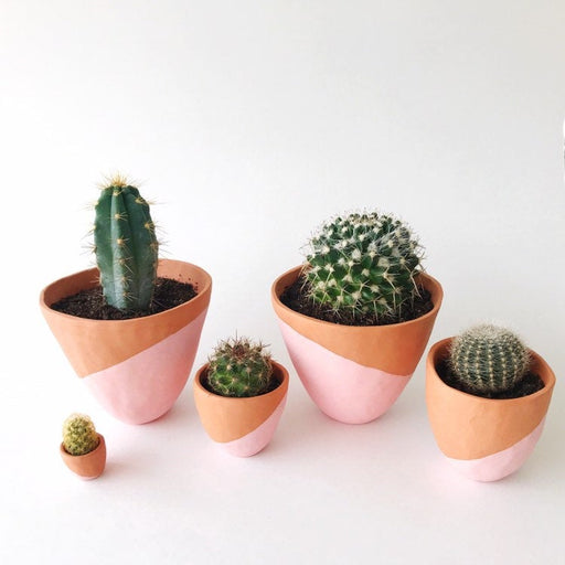 Azul Cactus and other cacti in Handmade Terra-cotta Ceramic Planters showing size differences