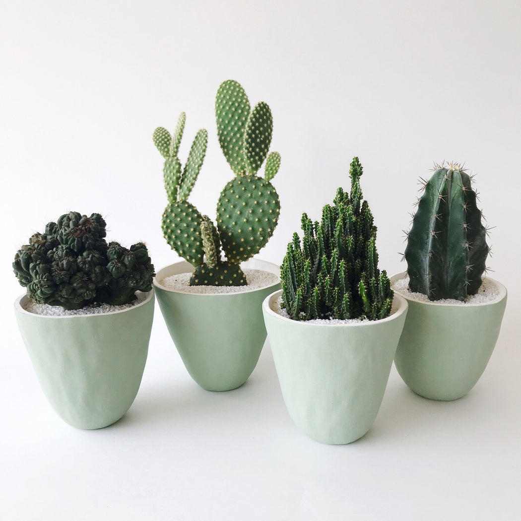 Four unique large cacti in Handmade Large Forest Green Ceramic Planters