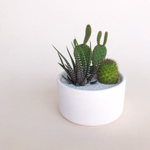 3 Cacti named Named Lupe, Gilbert, and a surprise barrel cactus in a handmade clay planter