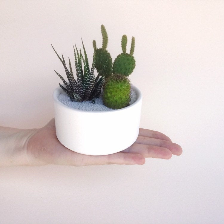 hand holding a large pot filled with 3 cacti and succulents and white cactus sand