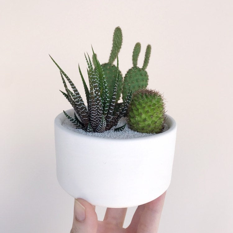 Hand holding the Cactus Trio in a  Handmade Thrown Ceramic Planter