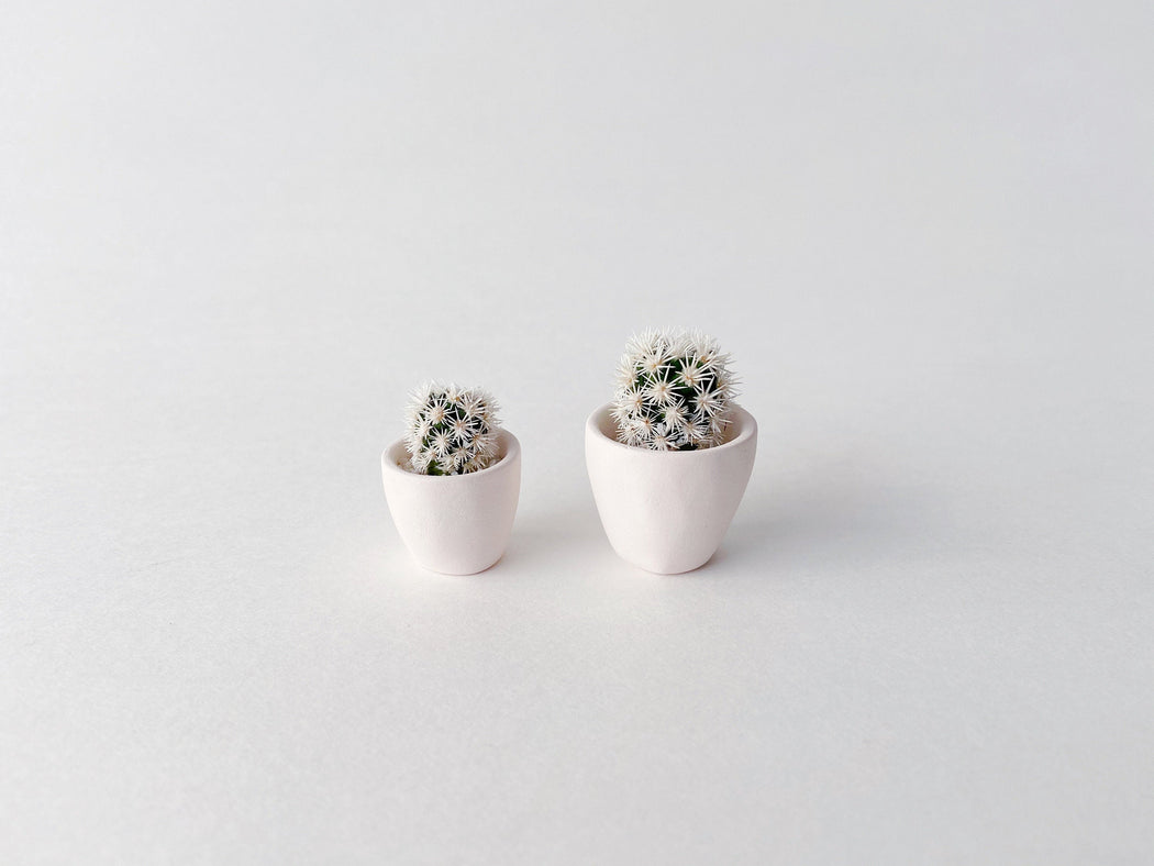 Two Candace Mini Cactus in white clay pots to show size difference in cactus and succulents