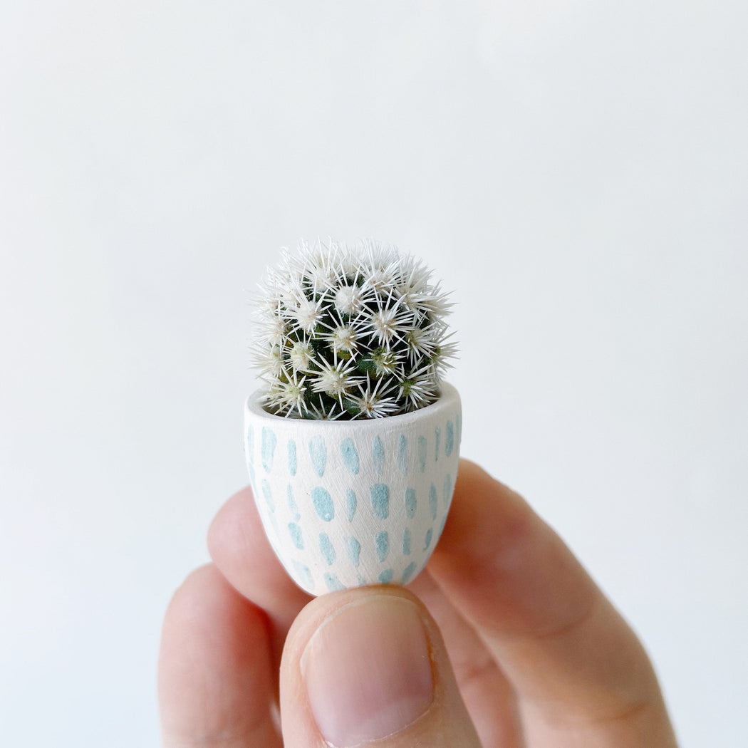 Hand holding Candace Mini Cactus planted in White and Aqua  Ceramic Planter