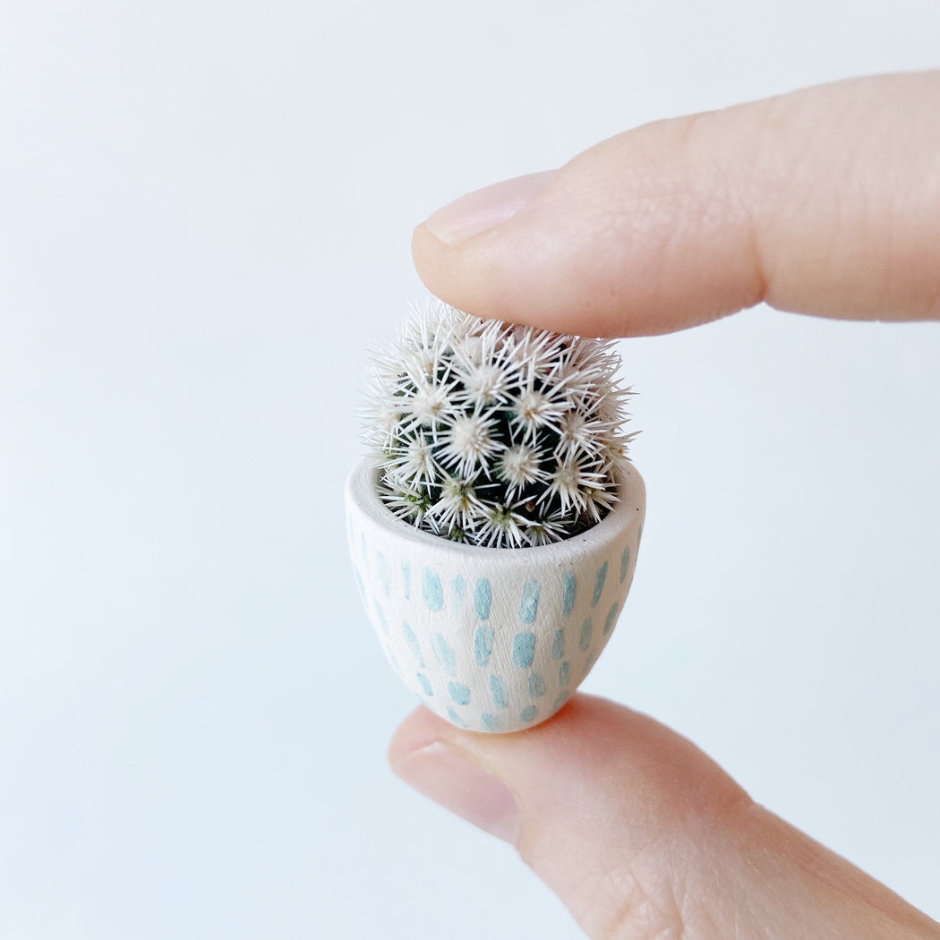 Hand holding not prickly cactus Candace in white and aqua Handmade mini ceramic planter