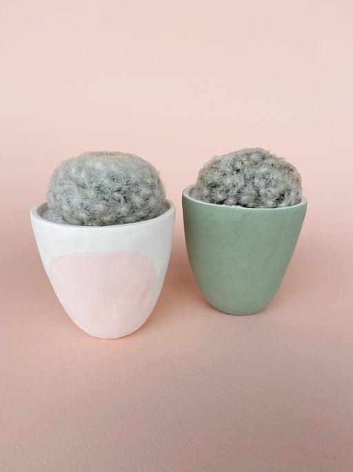Easy to Care for Cactus and Succulent in Handmade Pink Ceramic Planter and Green Planter