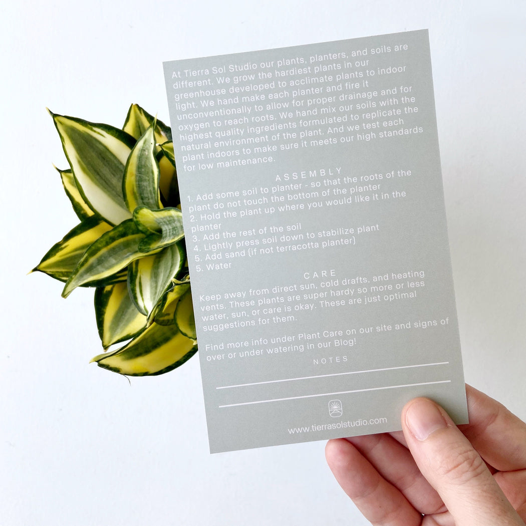 Back of the plant care card for Gold Sansevieria Hahnii Snake plant
