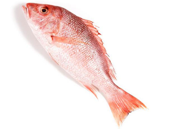 Red Snapper Machli Fish 2kg after cleaning
