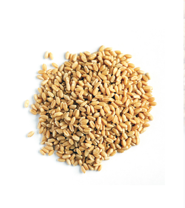 Wheat Barries Gandum 1kg