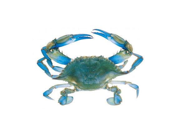 Blue Kekra / sea blue Crab Per kg