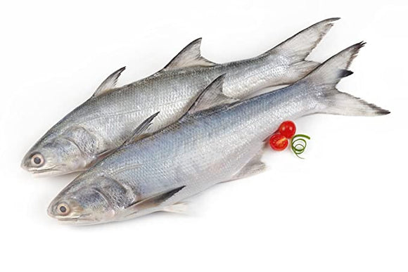 Indian Salmon (Rawas) 2kg (Next Day Delivery) (4734760419413)