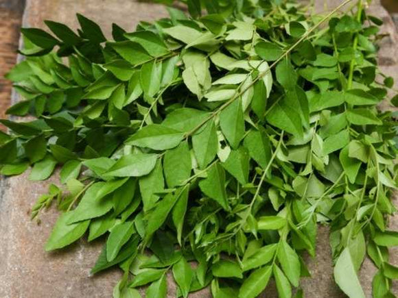 Curry Leaf (Kari Patta) 1 Gaddi (4714098688085)