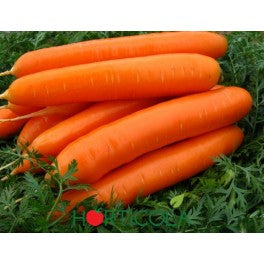 Carrot Thick Red gajar 0.5kg
