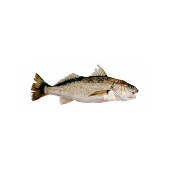 Dhotar Machli Fish 2 kg   (Next Day Delivery)