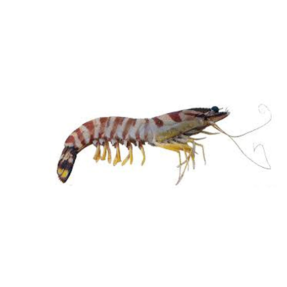 Flower Tiger Prawn Per kg
