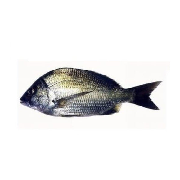 Gold Silk Bream Kala (Dandia) 2kg (Next Day Delivery)