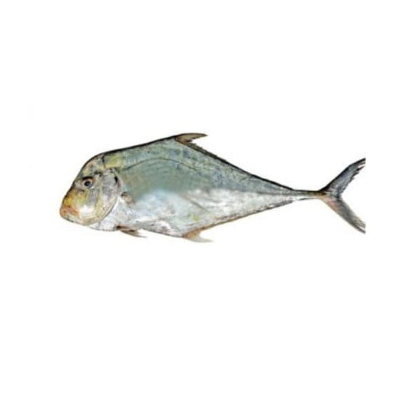 Diamond (Trevally) Pattal 2kg (Next Day Delivery)