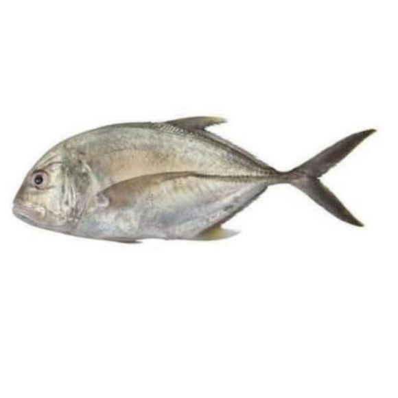 Malabar Trevally (Kakkan) 2kg (Next Day Delivery)