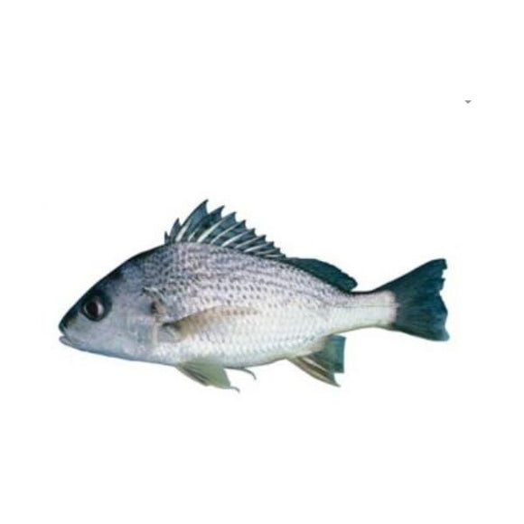 Spotted Grunter (Hulri Dhotar) 2kg (Next Day Delivery) (4734740463701)