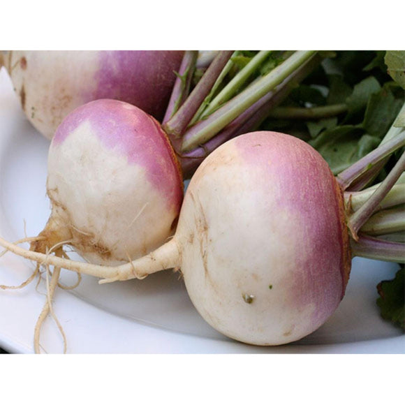 Shaljam Turnip Vegetable High Quality half kg