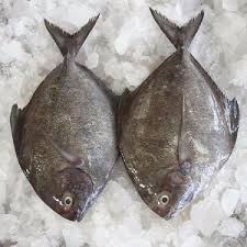 Big Fish Black Pomfret  Kaali Machli 2Kg after cleaning (Next Day Delivery)