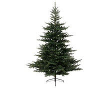 Load image into Gallery viewer, Grandis Fir Tree 210cm