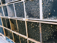 The Importance of Winter Hive Checks