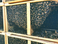 Why you should buy your honeybees from The Snohomish Bee Co.