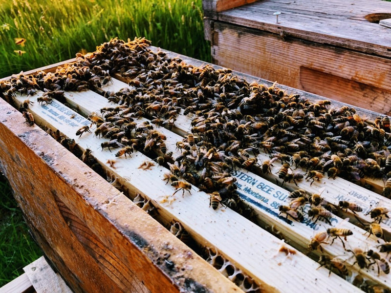 2018 Bee Season Has Closed @ Snohomish Bee Co.