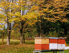 Fall/Winter Hours for the Snohomish Bee Company.